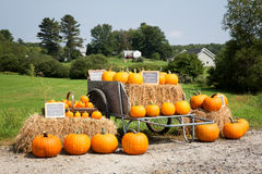 Pumpkin sale Stock Image