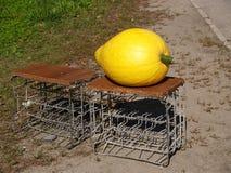Pumpkin sale at the road Stock Photos