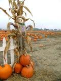 pumpkin scarecrow Στοκ φωτογραφία με δικαίωμα ελεύθερης χρήσης