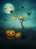 Pumpkin scarecrow in fields of  grass at night Stock Image