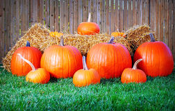 Pumpkin Scene. A halloween themed display of pumpkins and hay Royalty Free Stock Images