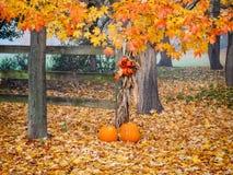 Pumpkin Scene Stock Image