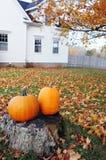 Pumpkin scenic Stock Images