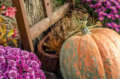 Pumpkin season Royalty Free Stock Photos