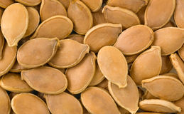 Pumpkin seed background. Stock Images