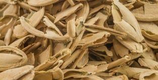 Pumpkin seed shells. A set of pumpkin seed shell heaps Stock Photos