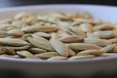 Pumpkin seeds on the plate. Pumpkin seeds on the white plate black table Stock Image
