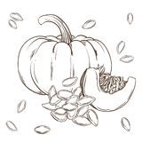 Pumpkin and seeds realistic isolated. Vector illustration of food. Hand drawing plants. Black and white sketch stock illustration