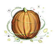 Pumpkin and Seeds Vitamins Illustration Royalty Free Stock Images