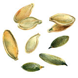 Pumpkin seeds, watercolor with clipping paths. Watercolour illustration of a handful of pumpkin seeds, clipping paths included Stock Photos