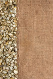 Pumpkin seeds were lying on sackcloth Stock Photography