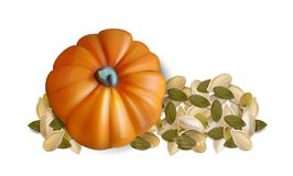 Pumpkin seeds on white background. Vector illustration royalty free illustration