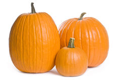 Pumpkin Series Stock Image