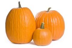 Pumpkin Series stock image