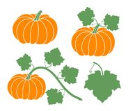 Pumpkin set. Isolated pumpkin on white background Royalty Free Stock Photography