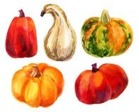 Pumpkin set. Royalty Free Stock Photography