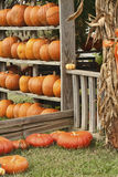 The Pumpkin Shack. This is a display of multicolored pumpkins at a local farmers market in Limestone County Alabama USA royalty free stock photos