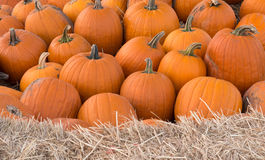Pumpkin Sharp Background Royalty Free Stock Images