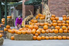 Pumpkin shopping Royalty Free Stock Images