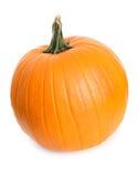 Pumpkin: Single Pumpkin on White Stock Image