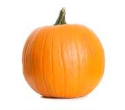 Pumpkin: Single Pumpkin on White Stock Photography