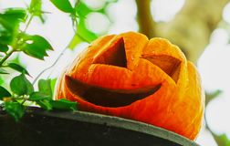 Pumpkin in the halloween day Royalty Free Stock Image
