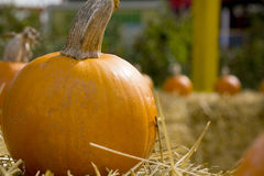 Pumpkin sitting on hay bale Royalty Free Stock Images