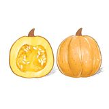 Pumpkin sketch draw isolated over white background Stock Images