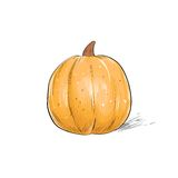 Pumpkin sketch draw isolated over white background Royalty Free Stock Photography