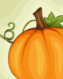 Pumpkin sketch Stock Photography