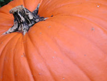 Pumpkin Skin Royalty Free Stock Photo