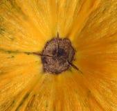 Pumpkin skin and stalk Stock Photos