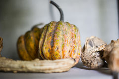 Pumpkin. Small pimpkin and other fruit Royalty Free Stock Photos