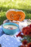 Pumpkin soup in blue plate with green background royalty free stock photo