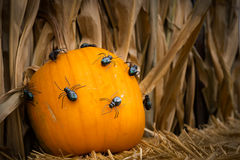 Pumpkin with spiders Stock Images