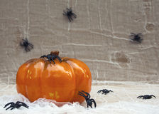 Pumpkin and spiders Royalty Free Stock Photography