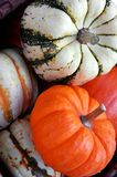 Pumpkin and squash. A thanksgiving treat Stock Photography