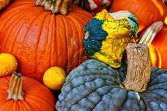 Pumpkin and squash. Fall season - multicolor pumpkins and squashes Royalty Free Stock Photo