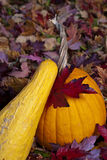 Pumpkin and squash autumn Stock Image