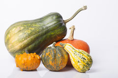 Pumpkin and squash autumn backgrounds Stock Images