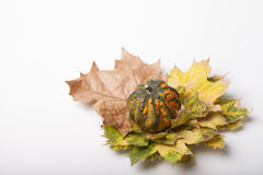 Pumpkin and squash autumn backgrounds Royalty Free Stock Image