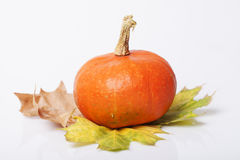 Pumpkin and squash autumn backgrounds Royalty Free Stock Photo