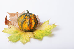 Pumpkin and squash autumn backgrounds Stock Photography