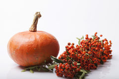 Pumpkin and squash autumn backgrounds Stock Image