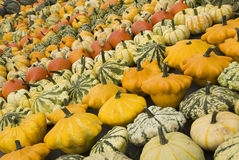 Pumpkin and squash background Royalty Free Stock Photos