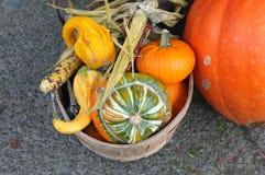 Pumpkin Squash Close-up Stock Photo