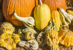 Pumpkin and squash composition Stock Photography