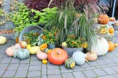 Pumpkin Squash Garden Royalty Free Stock Photo