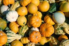 pumpkin, squash, and gourd Stock Photo