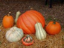 Pumpkin, squash, medley stock images